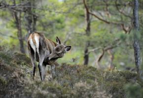 Rapportering av sett vilt kan gjerast undervegs i jakta. (Foto: Egill J. Danielsen)