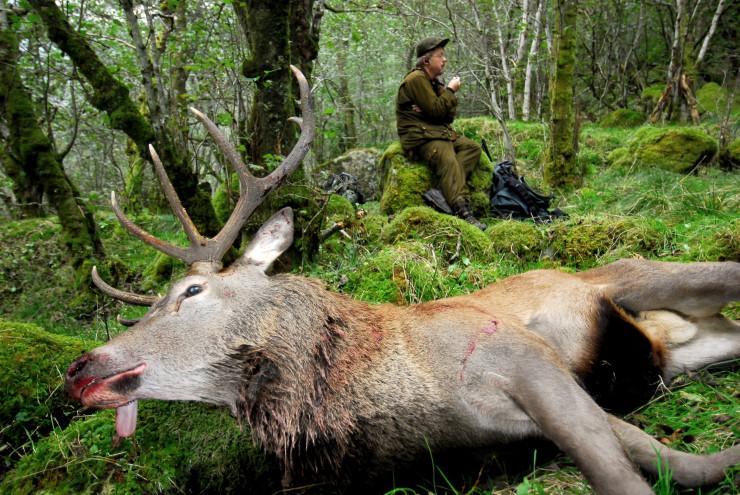 Økning i antall felte hjort