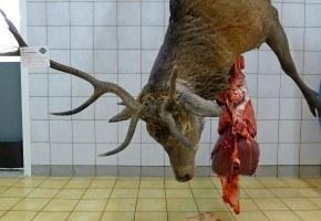 Slaktebehandling og mørning av hjortevilt – viltsmak eller usmak?