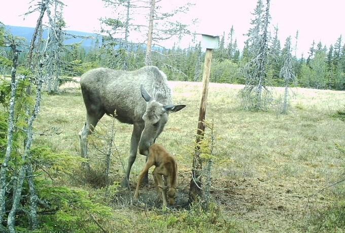 Bruk av viltkamera – kameraovervåking