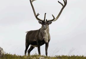 Testet 6000 hjortevilt for skrantesyke under jakta