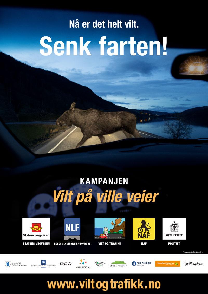 Informasjonstiltak rettet mot veifarende skal heretter har høg prioritet i kampanjen Vilt på ville veier.
