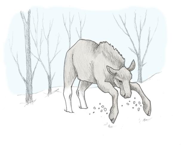 elg-angrep-4