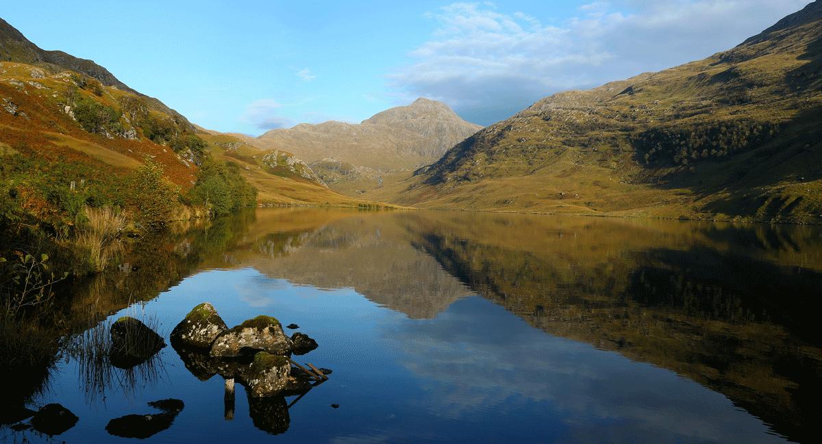 Mange forbinder Skottland med «the highlands» som består av store åpne lyng- eller gressheier. I områder med mye hjort er det gress som dominerer. Tettheten av hjort forhindrer naturlig etablering av skog. Foto © Johan Trygve Solheim.