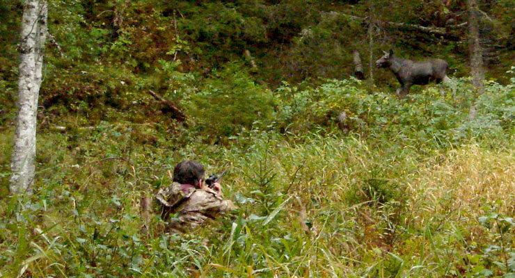 Sett elg og sett hjort — tetthetsindekser og oppdagbarhet