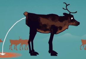 Lær om skrantesjuke i animasjonsfilm
