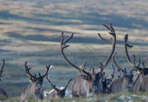 Mistanke om to nye tilfeller av skrantesjuke i Nordfjella