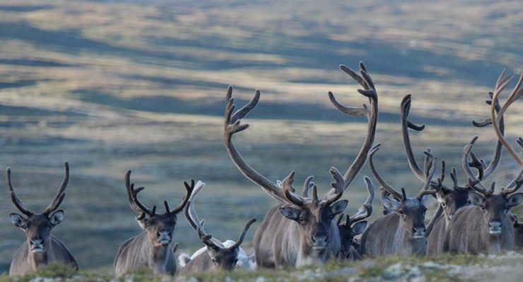 Ingen positive skrantesykeprøver utenfor Nordfjella