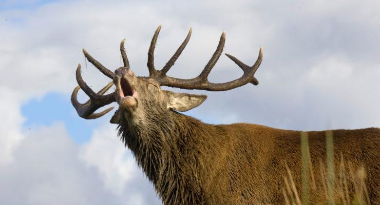 Kurs og hjorteviltarrangementer 2018