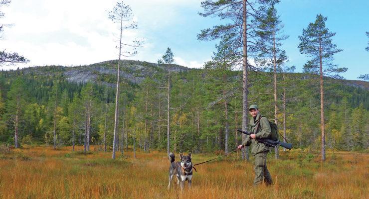 Norsk viltkjøtt – helt eller stykkevis og delt?