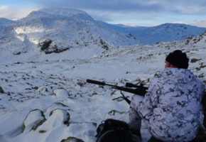 Statlig felling i gang i Nordfjella