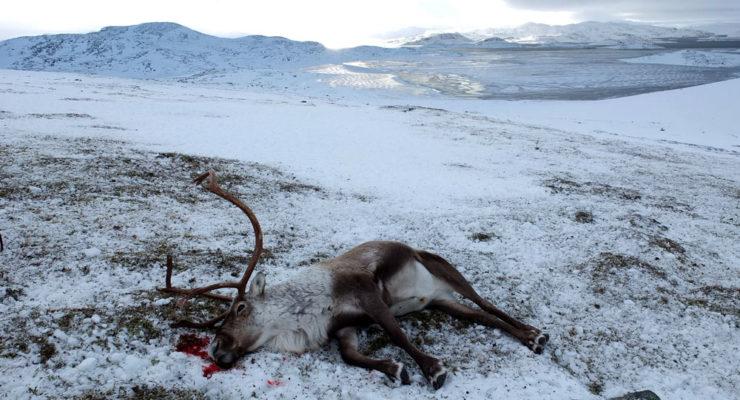 Mistanke om nytt tilfelle av skrantesjuke i Nordfjella