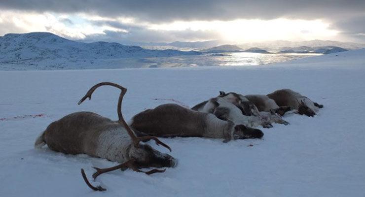 Alle kjente dyr felt i Nordfjella