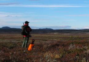 Stor verdiskapning fra jakt og fiske